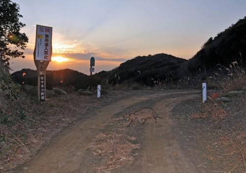 保護区の入り口にでたヤマネコ